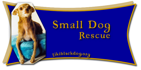 Small Dog Rescue